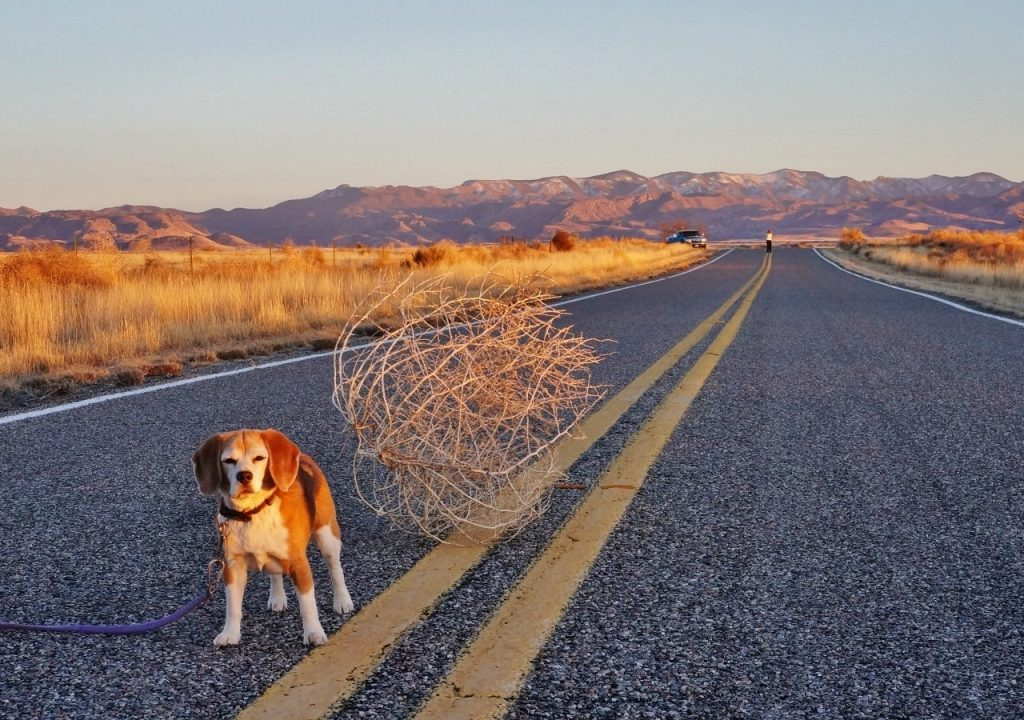 Tumbleweed on highway to Chiricahua National Monument Arizona