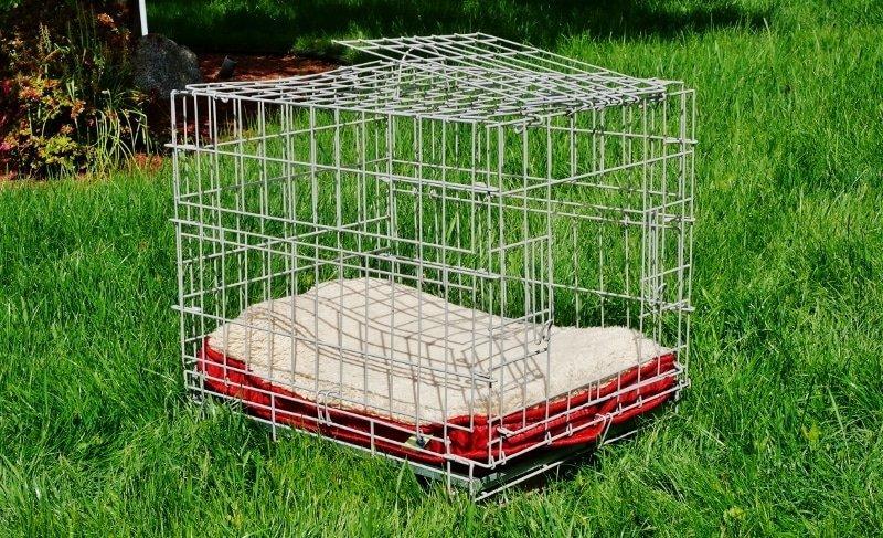Wire kennel