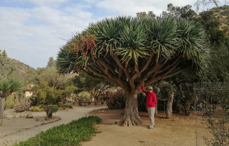 Catalina Island Trip Photo