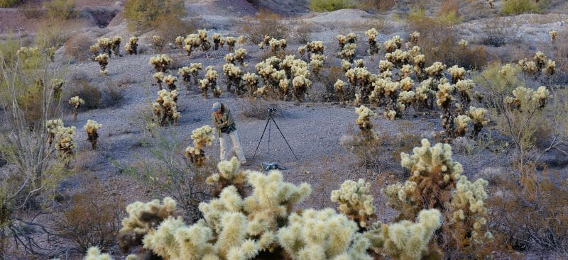 Anne in Cholla Garden