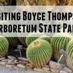 Boyce Thompson Arboretum Feature Photo