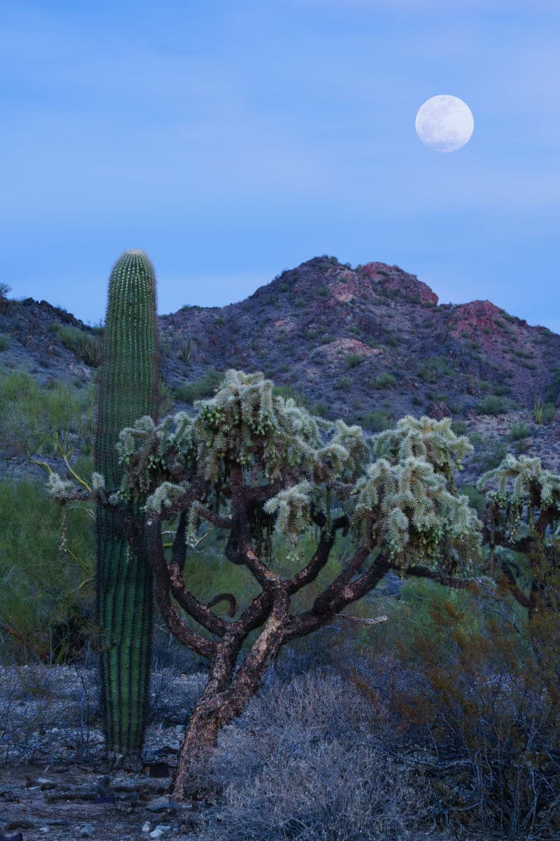 Super Moon in Ajo, Arizona
