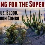 Hunting for the super moon Ajo AZ Feature Photo