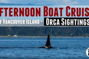 Whale Watching Near Campbell River BC Feature Photo