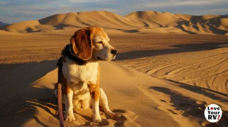 A Great Beagle Life – Memorial to Angie