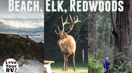 Beach, Elk and the Redwoods – Northern California Coast