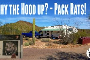 Pack Rat Tip Feature Photo