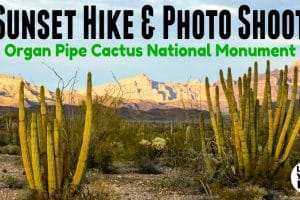 Organ Pipe Sunset Hike Feature Photo