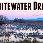 Whitewater Draw Wildlife Area Feature Photo