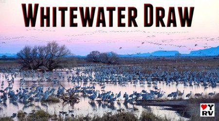 Spectacular Wildlife Scenes – Whitewater Draw, Arizona