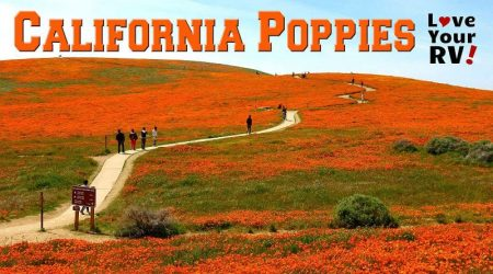 Visit to Antelope Valley Poppy Reserve in Southern California