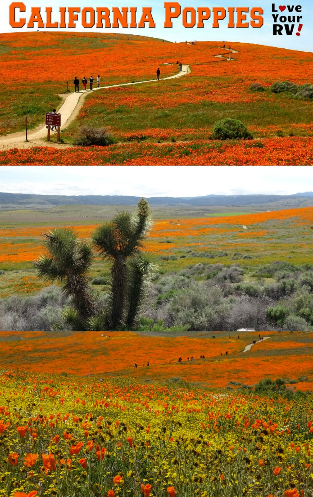 Antelope Valley Poppy Reserve Video Footage from the spring 2019 super bloom -  https://www.loveyourrv.com/visit-to-antelope-valley-poppy-reserve-in-southern-california/
