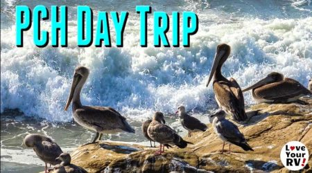 Butterflies, Birds and Beaches – Santa Cruz to Half Moon Bay