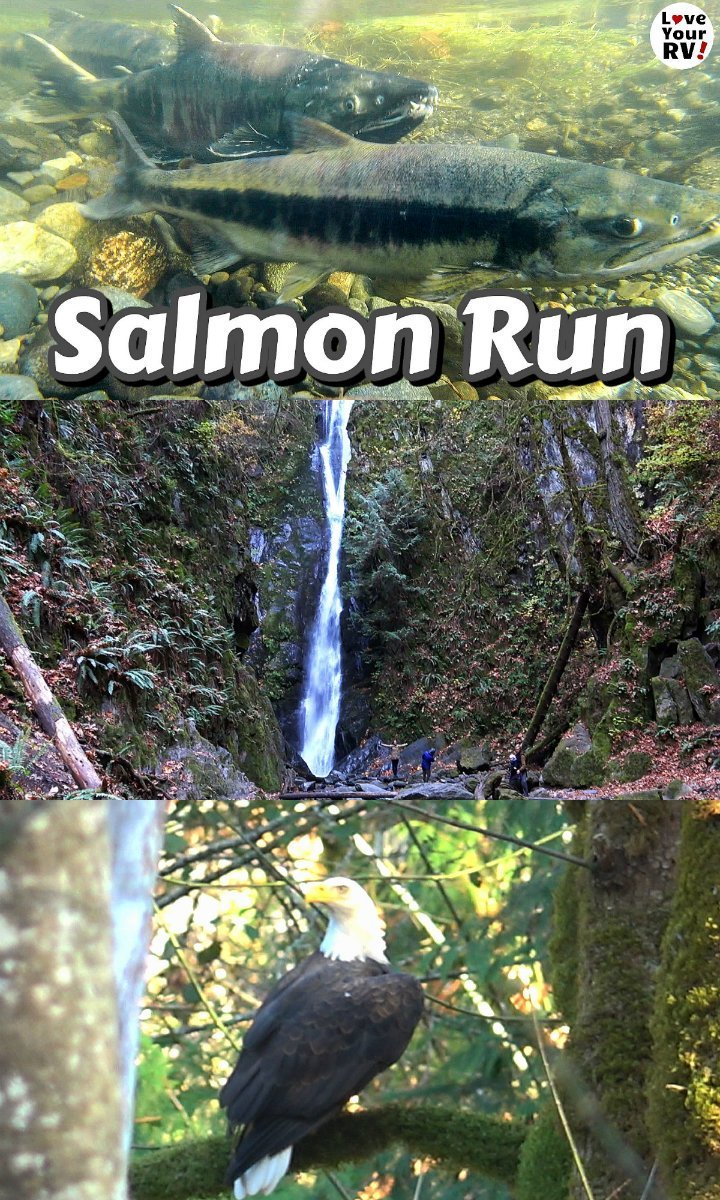 Visiting Goldstream Provincial Park in Fall 2019 to view the annual salmon run
