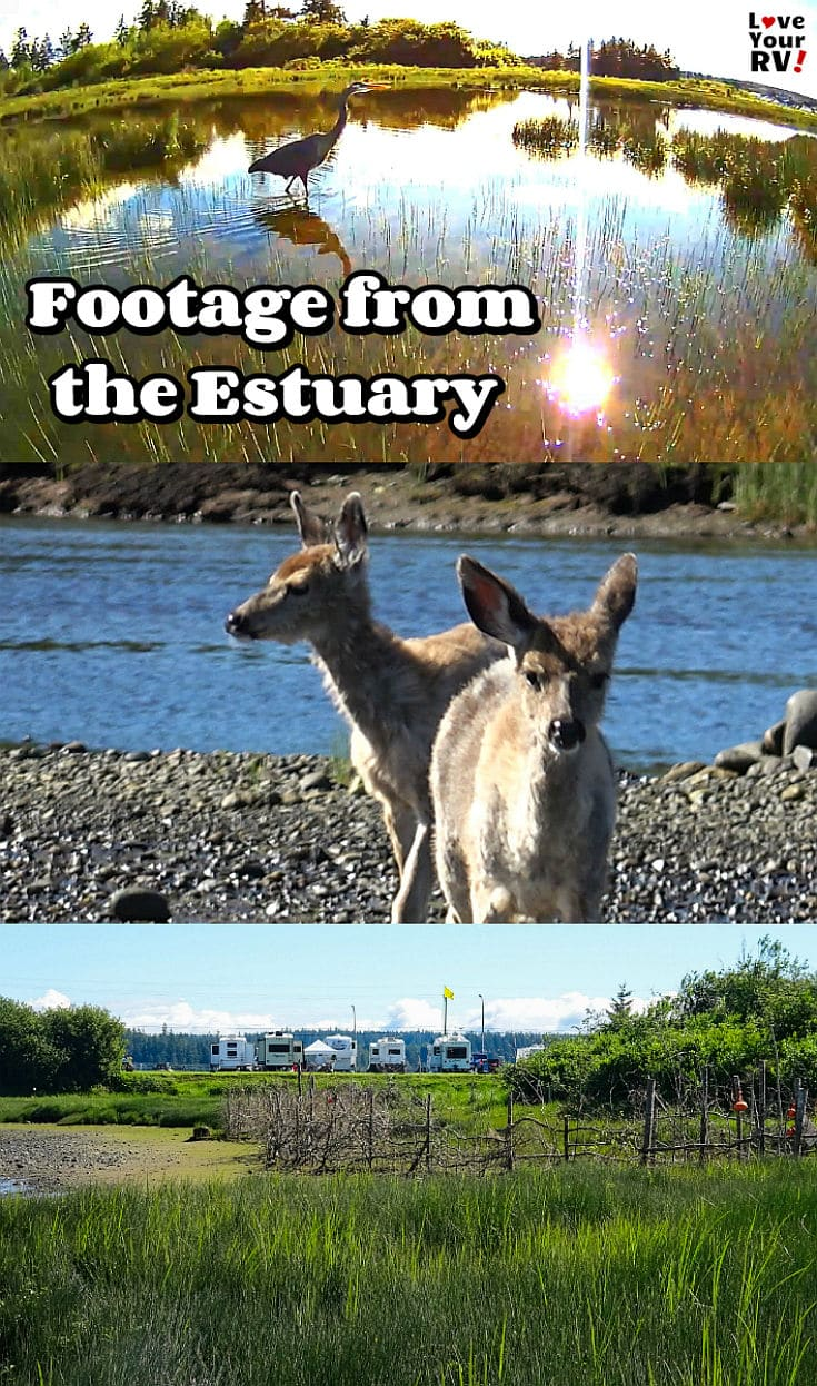 Video Footage from the Estuary in Campbell River British Columbia on Vancouver Island