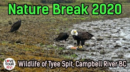 Relaxing Wildlife Montage Video from Tyee Spit, Vancouver Island