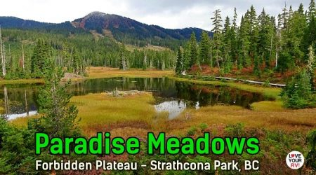 Fall Visit to Paradise Meadows Loop Trail – Vancouver Island, BC